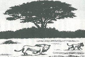 Safari à Nairobi