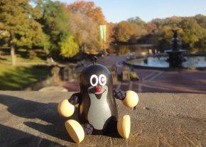 Taupek à Central Park
