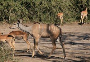 Parc Chobé, Botswana