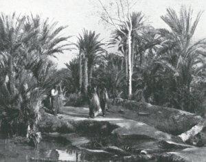 Oasis, Tunisie